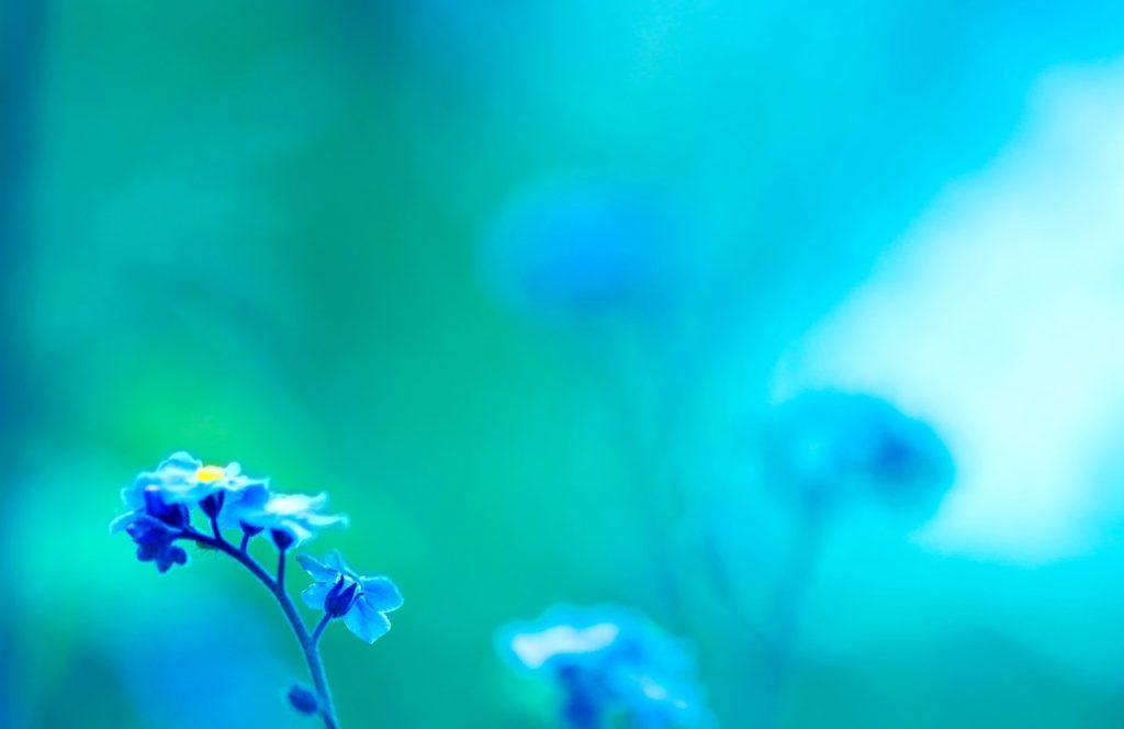 flower meanings