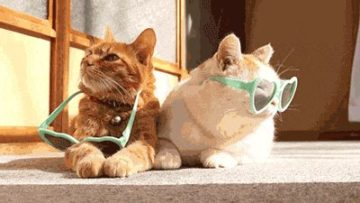 Keeping Cat Entertained And Pampered
